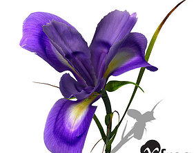 XfrogPlants Dutch Iris 3D model