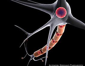 Neuron cell 3D