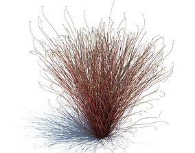 Red Grassy Plant 3D model