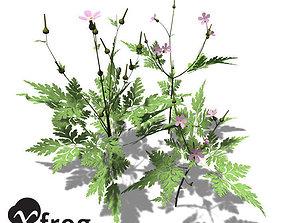 3D XfrogPlants Herb Robert