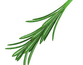green 3D model Rosemary