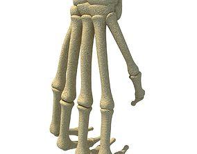 Bones of Animal Hand 3D model