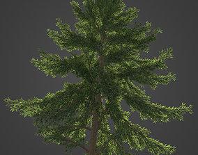 2021 PBR Koyama Spruce Collection - Picea Koyamai 3D