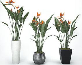 Strelitzia 3D model
