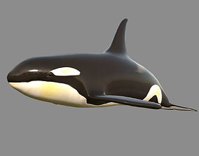 Low poly Killer Whale 3D Model Animated - Game animated