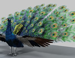 3D model feather Peacock