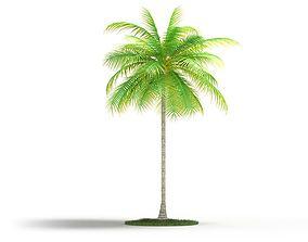 Palm Tall Tree 3D