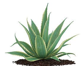 3D Aloe Aloe Vera