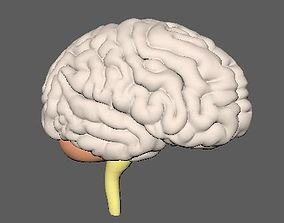 realtime Human Brain 3D model Nervous