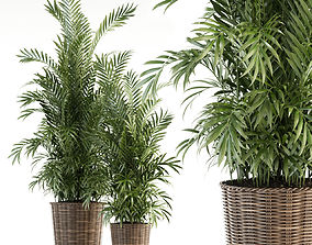 Plants collection 93 3D