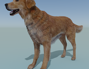 Dog Golden Retriever Rigged 3D asset