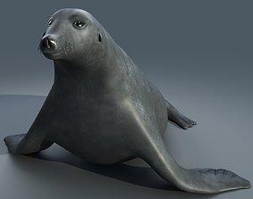 3D model Sea Lion Seal