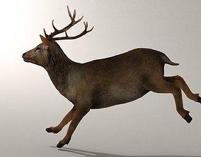 3D asset Game Ready Deer Model