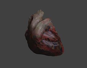 Low Poly Human Heart 3D model