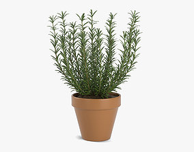 3D Growing Rosemary