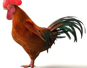Chicken Rigged 3D model rigged