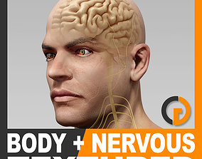 3D model Human Male Body and Nervous System Textured -