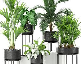 3D model Plants collection 365