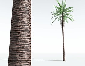 EVERYPlant Date Palm LowPoly 11 --10 Models-- game-ready
