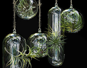 Hanging Air Plants other 3D