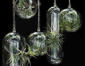 3D Hanging Air Plants