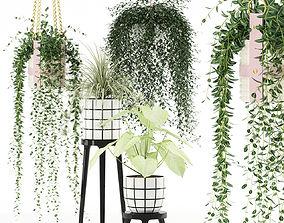 Plants collection 121 3D