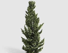 Holly wood Juniper tree collection 27 trees 3D asset 3
