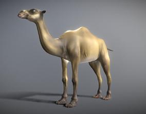 3D rigged Camel