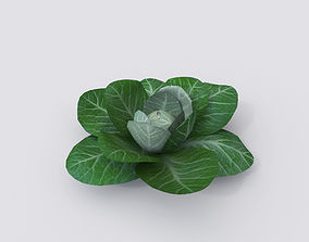 other cabbage 3D