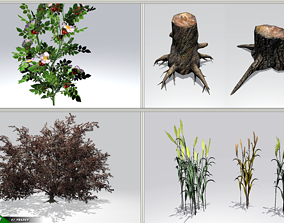 Realistic Ground Cover Collocation Pack 3D Model low-poly