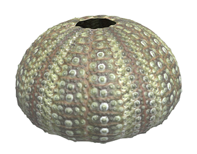 Sea Urchin 3D model VR / AR ready
