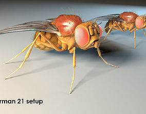 3D model Fruit Flies Accurate - Male and Female
