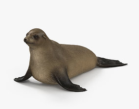 Brown Fur Seal HD 3D