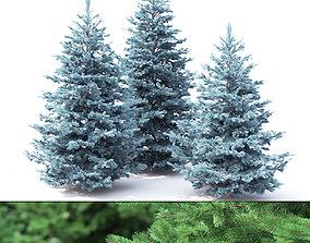 3D model Picea 02