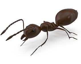 Ant Model 3D