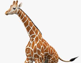 Giraffe Animated 3D asset realtime