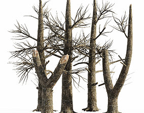 3D model 5 Burnt Tree collection pine-tree
