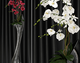 Orchid Arrangement 2 3D model