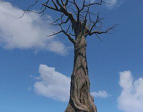 Ancient Tree V6 3D model