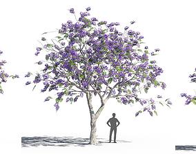 3D Jacaranda mimosifolia 3