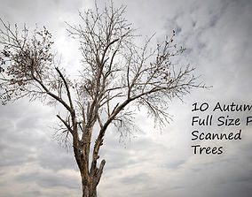 3D model 10 Autumn Photo-Scanned Full Size Trees