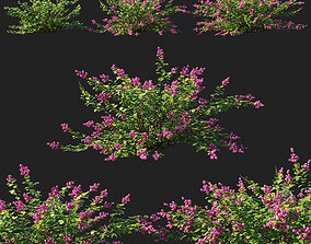 Symphoricarpos berry bush 3D model