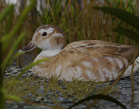 3D model hunting duck