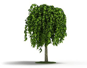 Short Weeping Tree 3D model