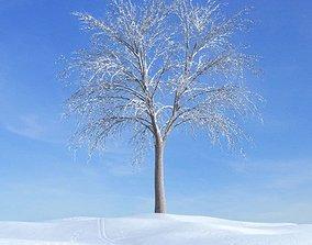 3D Winter White Tree
