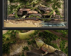 3D model Terrarium Agama