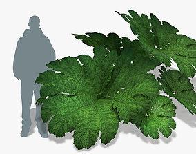 3D model Plant Gunnera