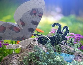 Apollo Butterfly 3D asset