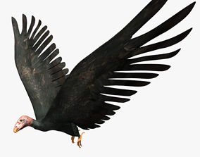 Game Ready low poly Rigged Vulture Condor 3D model