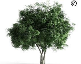 Elm tree 3D